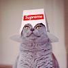 leow_oscar userpic