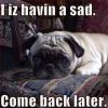 I Haz A Sad