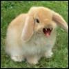 blt_bunny userpic