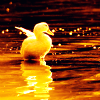natural_blue_26: Animals ~ Baby duck