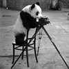 panda with camera