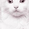 kittylefae: Ariel