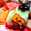 musical kittay.