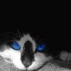 синие глаза black