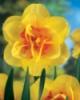 narciss_flower userpic
