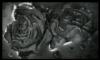 roses drowning