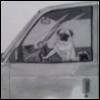 Driving pug