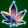 weedfairy userpic