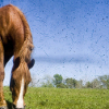 Picture - horse