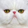 pansypolaroid userpic