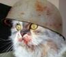 Спасти рядового Кота