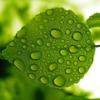 petite_leaf userpic