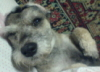 reddog70 userpic
