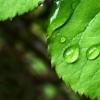 москва, экология