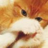 *~Kristen*~: Stock - Hiding Kitten