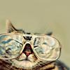 icecoldrain: Stock - Cats