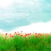 adenriver: poppy thingies