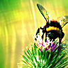 buzzlocke userpic