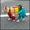 dogpresents