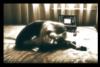 julya_love userpic