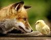 Fox & Tweety