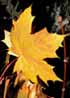 misty_mm userpic