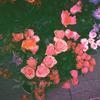 floweromance userpic