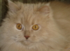 archani_cat userpic