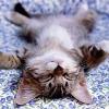 catnip_project userpic