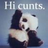 panda, cunts