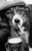 пес с сигой