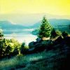 elvenknight16: Just Green