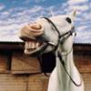 Лошадь императора