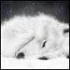 wolfshonour userpic