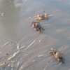 Italy, crabs, Rimini, sea, nature