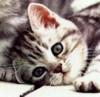 plomlard userpic