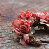 [nature] fallen roses on cobblestones