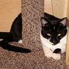 ~Lirpa~: Kitty: Junior Mint 1