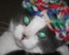 matsurimai userpic