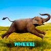"Laura, aka ""Ro Arwen"": Elephant - Whee!"