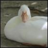 avolo1 userpic
