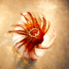 ballerina, DW