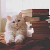 котик книги