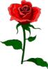 juli_flower userpic