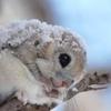misc - hee!squirrel