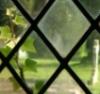 windows ivy gravestone