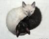 кот, женщина, кошка, мужчина, любовь