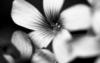 junipe35 userpic