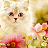 Devoted driver: Stock - Cat and flowers