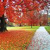 stock - autumn path